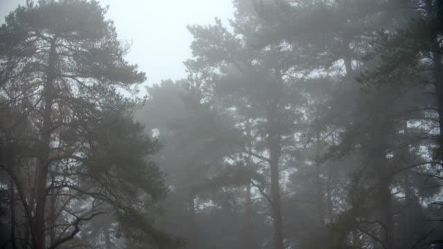 Autumn Woodland On A Misty Morning video