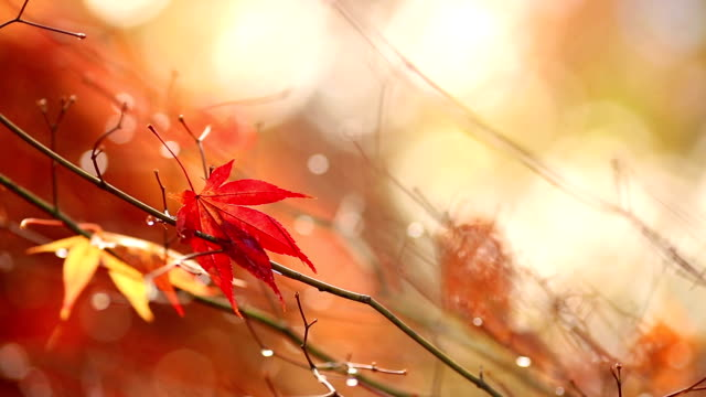 Autumn. Yellow blurred sunny background with colorful falling leaves.