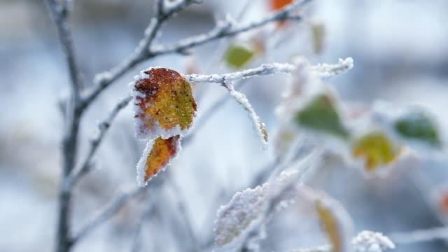 herbstgelbes blatt auf einem mit frost bedeckten ast im spätherbst - laub winter stock-videos und b-roll-filmmaterial