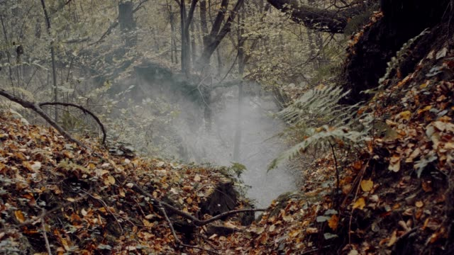 Autumnal forest with fog and ferns