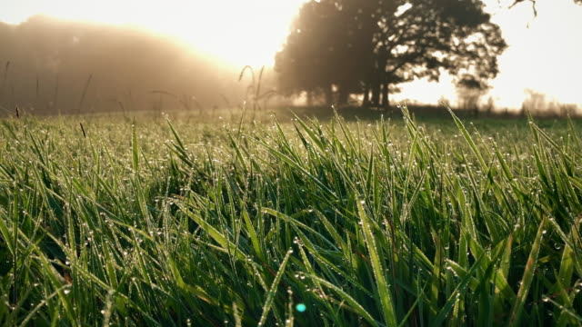 Autumnal morning dew on fresh grass - video
