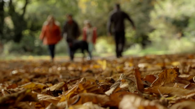 Autumnal Walk In The Park video