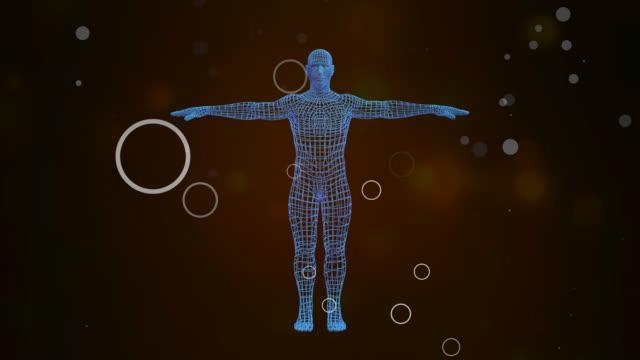 3d avatar visar holografisk projektion av människokroppen roterande i sömlös slinga. - djurkropp bildbanksvideor och videomaterial från bakom kulisserna