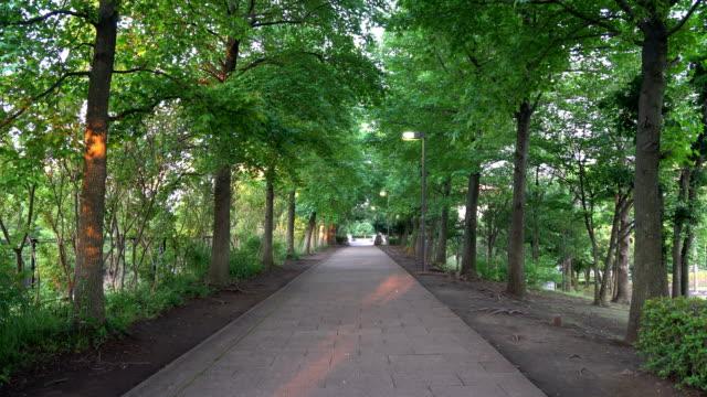 Avenue at break of day with birds' tweet video