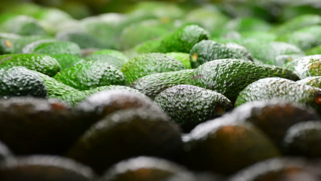 Avocado hass in packaging line Avocado hass in packaging line avocado stock videos & royalty-free footage