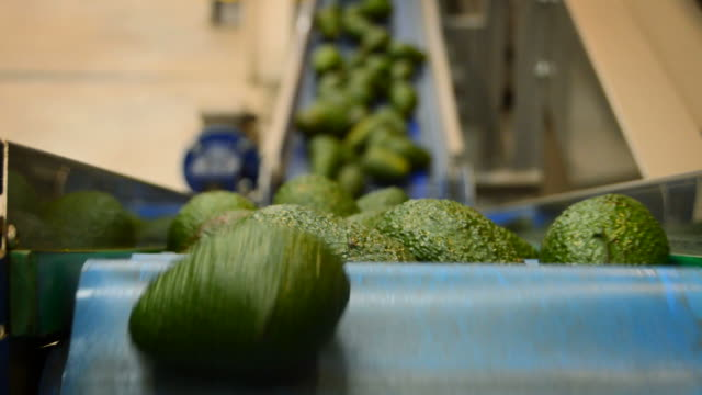 Avocados hass in packaging line, close up Avocados hass in packaging line, close up avocado stock videos & royalty-free footage