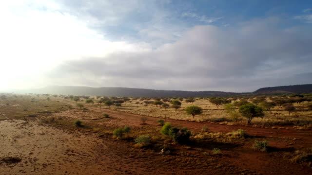 warten auf nacht - savanne stock-videos und b-roll-filmmaterial