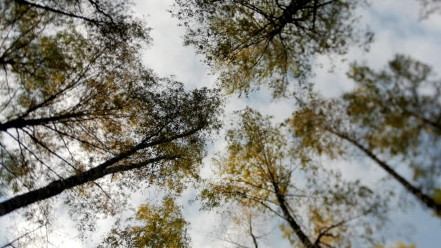 Awesome autumn forest. The tops of the trees bear against the blue sky. Falling leaves video