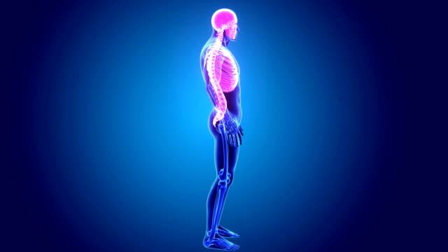 axiella skelettet - acupuncture bildbanksvideor och videomaterial från bakom kulisserna