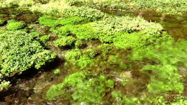 Azmak Stream of Akyaka, Mugla, Turkey video