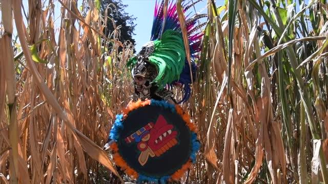 vídeos de stock, filmes e b-roll de guerreiro asteca em busca de inimigos entre os campos de milho - tradição