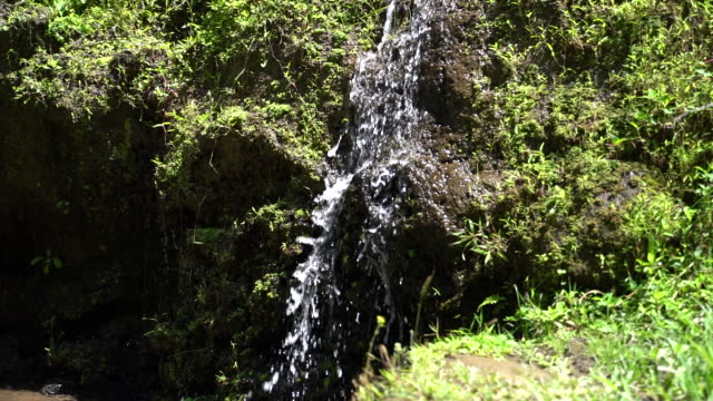A babbling brook or stream with soaking wet rocks and stepped little waterfalls