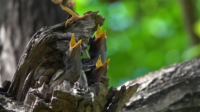 Baby birds wait for their mother to feed.