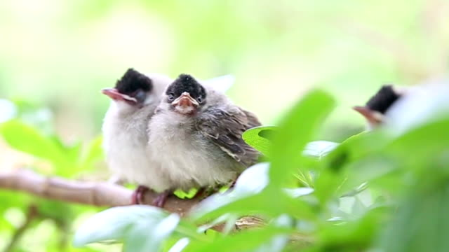 baby birds waiting mother video