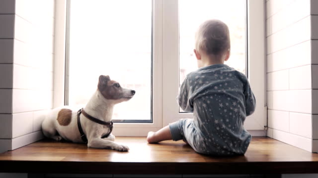 vídeos de stock e filmes b-roll de baby boy and the dog looking out the window - animal doméstico