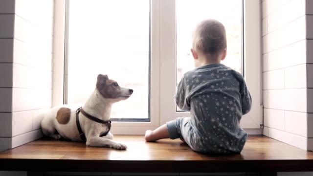 baby boy und der hund schaut aus dem fenster - nutztier oder haustier stock-videos und b-roll-filmmaterial