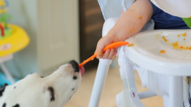baby boy lets pet dogs eat his leftovers - birichinata video stock e b–roll