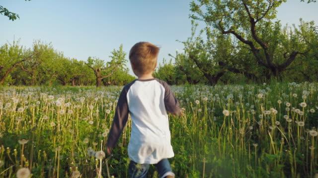 A baby boy running through a meadow of dandelions