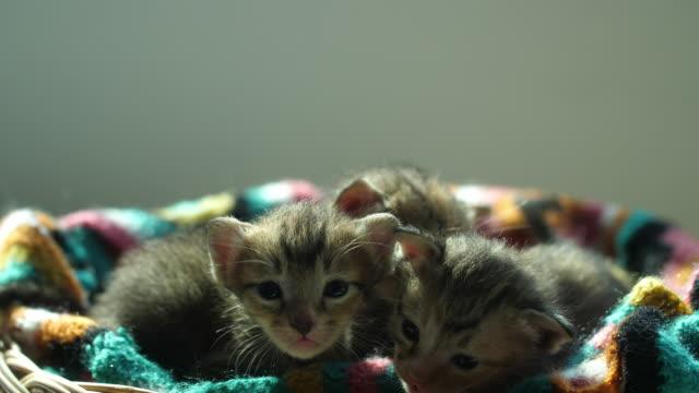 赤ちゃん猫 - 籠点の映像素材/bロール