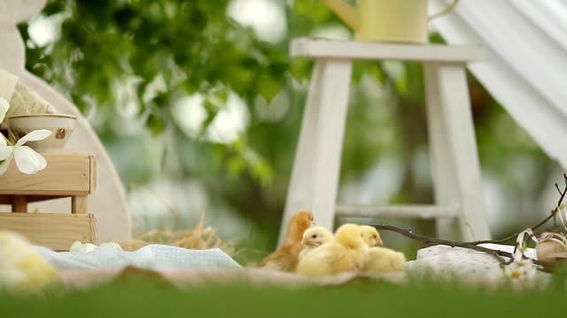 babyküken auf ostereiersuche - osterhase stock-videos und b-roll-filmmaterial
