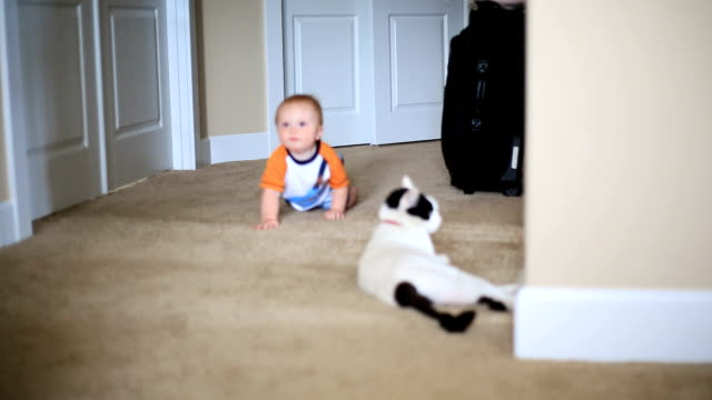 Baby Crawling Sequence video