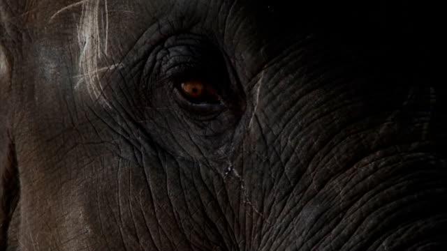 Baby Elephant Eye - Close Up video