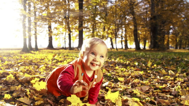 Baby girl crawling over autumn leaves in the park video