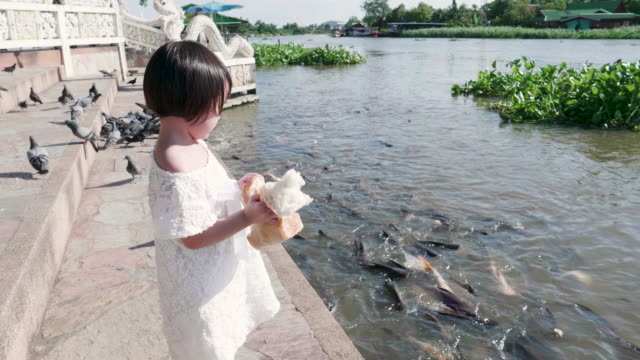 Baby Girl Feeding Fish In The River video