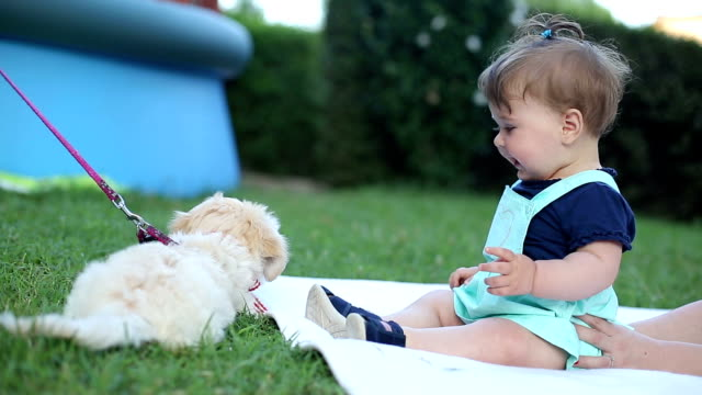 Baby having fun with it's puppy Baby having fun with it's puppy puppy stock videos & royalty-free footage