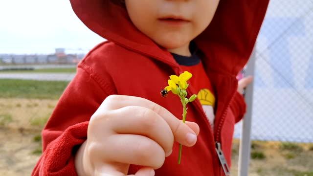 vídeos y material grabado en eventos de stock de bebé una flor con aire libre de mariquita - compartir
