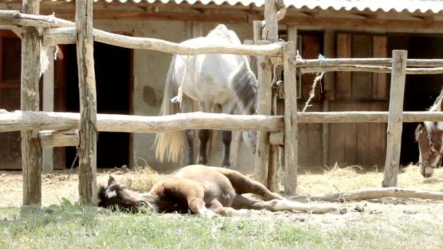 Baby Horse video