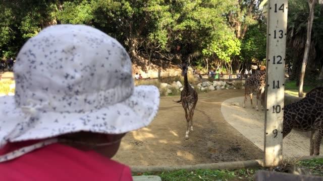 Baby die giraffen in de dierentuin waart video