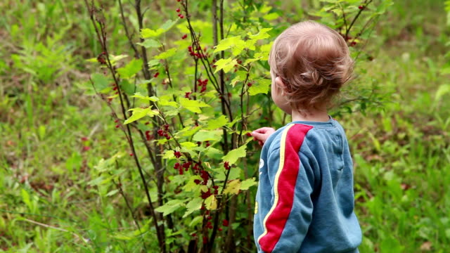 baby picking red currant berries from the bush in the garden - ribes rosso video stock e b–roll