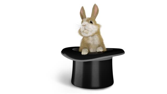 bir sihirbaz şapkası çıkan bebek tavşan - tavşan hayvan stok videoları ve detay görüntü çekimi