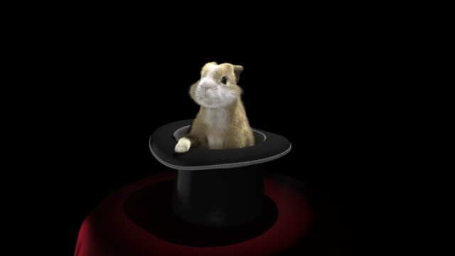 baby rabbit coming out of a magician's hat