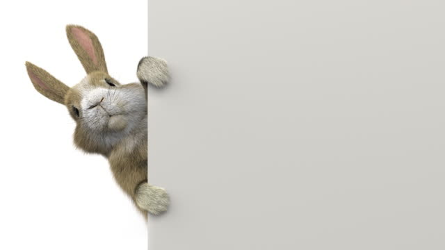 baby rabbit peeking behind a banner / wall