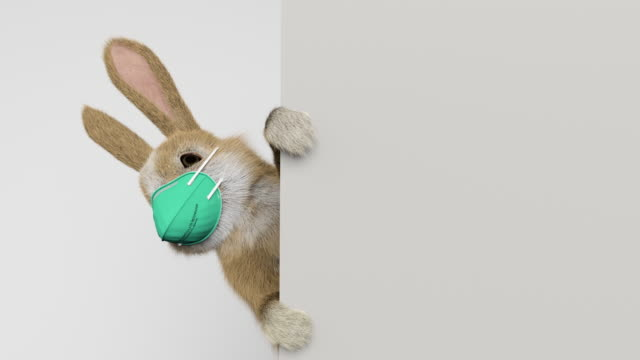 Video baby rabbit peeking behind a wall or a banner with a surgical mask