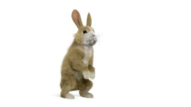baby kaninchen läuft, hört auf zu schnüffeln und aufstehen auf ihren hinterbeinen und läuft weiter - osterhase stock-videos und b-roll-filmmaterial