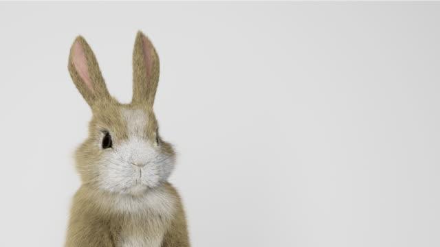 bebek tavşan ayakta ve etrafa bakıyor - tavşan hayvan stok videoları ve detay görüntü çekimi