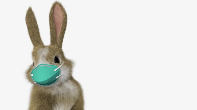 baby rabbit standing up and looking around with a surgical mask