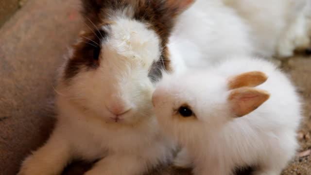 vídeos y material grabado en eventos de stock de conejito - animales de granja