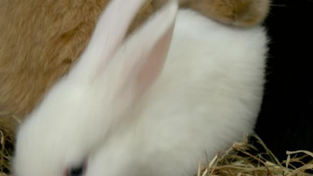 vídeos de stock, filmes e b-roll de bebê coelho branco close up - punhado