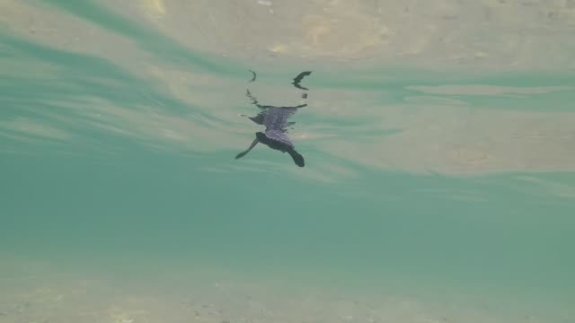 Baby sea turtle swimming underwater