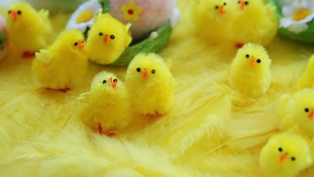 Baby yellow Easter toys chicks and eggs on a background of feathers. Festive video greeting card video