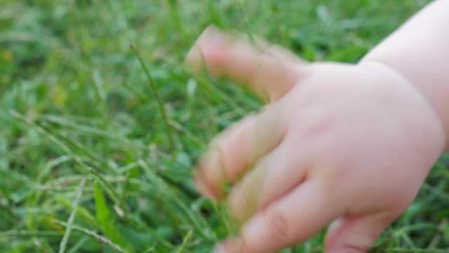 Baby's hand feels the grass. Senses concIept. Infant outdoor touching object. Baby's hand feels the grass. Fingers of toddler touching everything around. New life concept. Life beginning. Human and nature. Organic life concept. Newborn feeling the earth. first occurrence stock videos & royalty-free footage