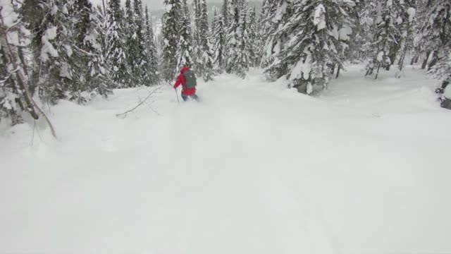 back country skiing deep powder through forest - sci video stock e b–roll