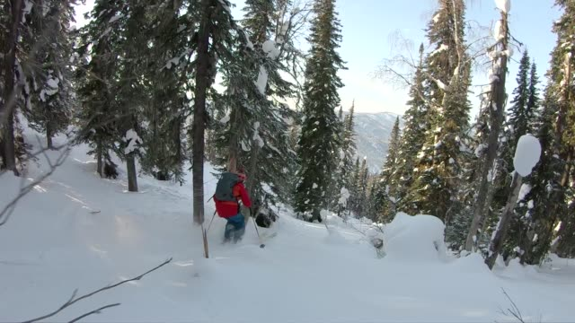 back country skiing through powder in forest - sci sci e snowboard video stock e b–roll