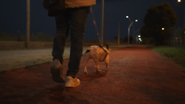 Back view of handsome young man, walking with his dog in the evening with a back bag