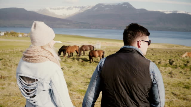 Back view of young couple on the Iceland farm and looking on the horses. Man and woman spending time on the nature video