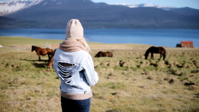 Back view of young stylish woman standing on the nature and looking on the Icelandic horse grazing on a field video
